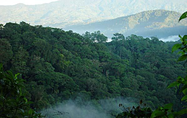 regnskog i Turialba