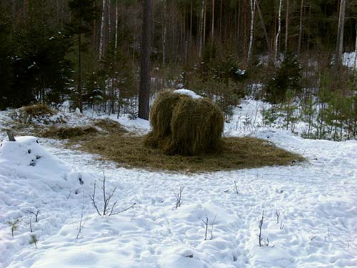 hö i skogen