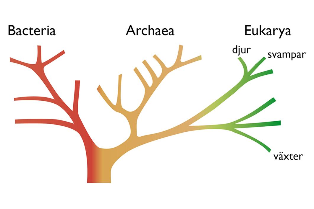 Illustration Bioresurs
