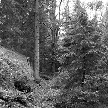 Skogsmiljö. Foto Bioresurs