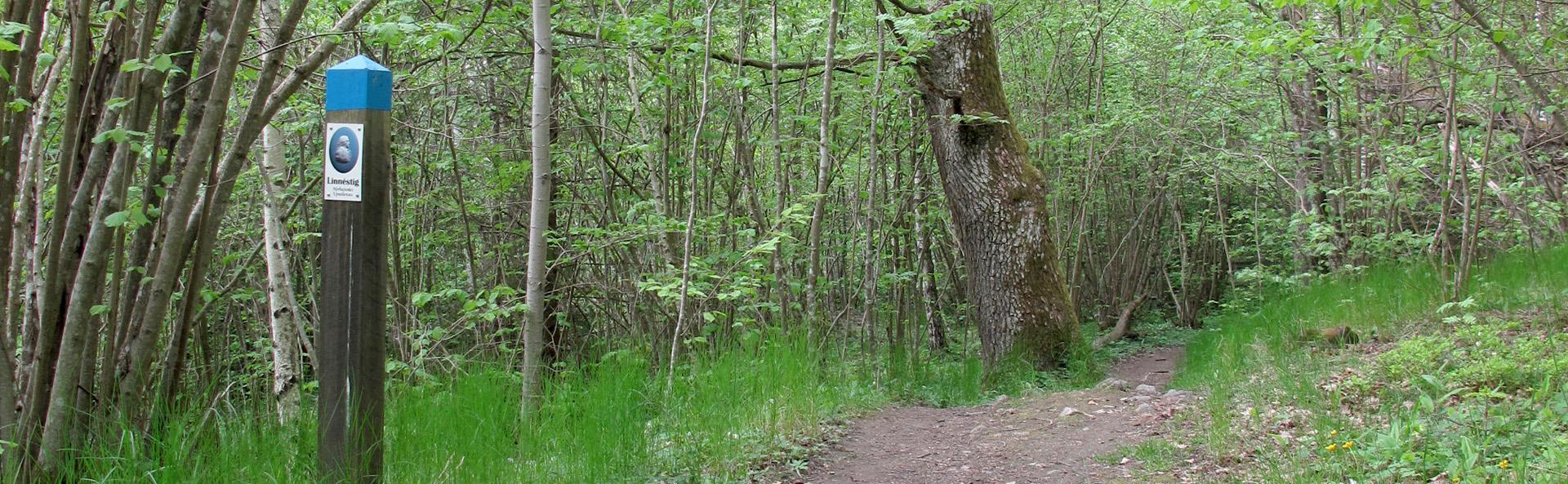 Lövskog på våren. Foto: Bioresurs