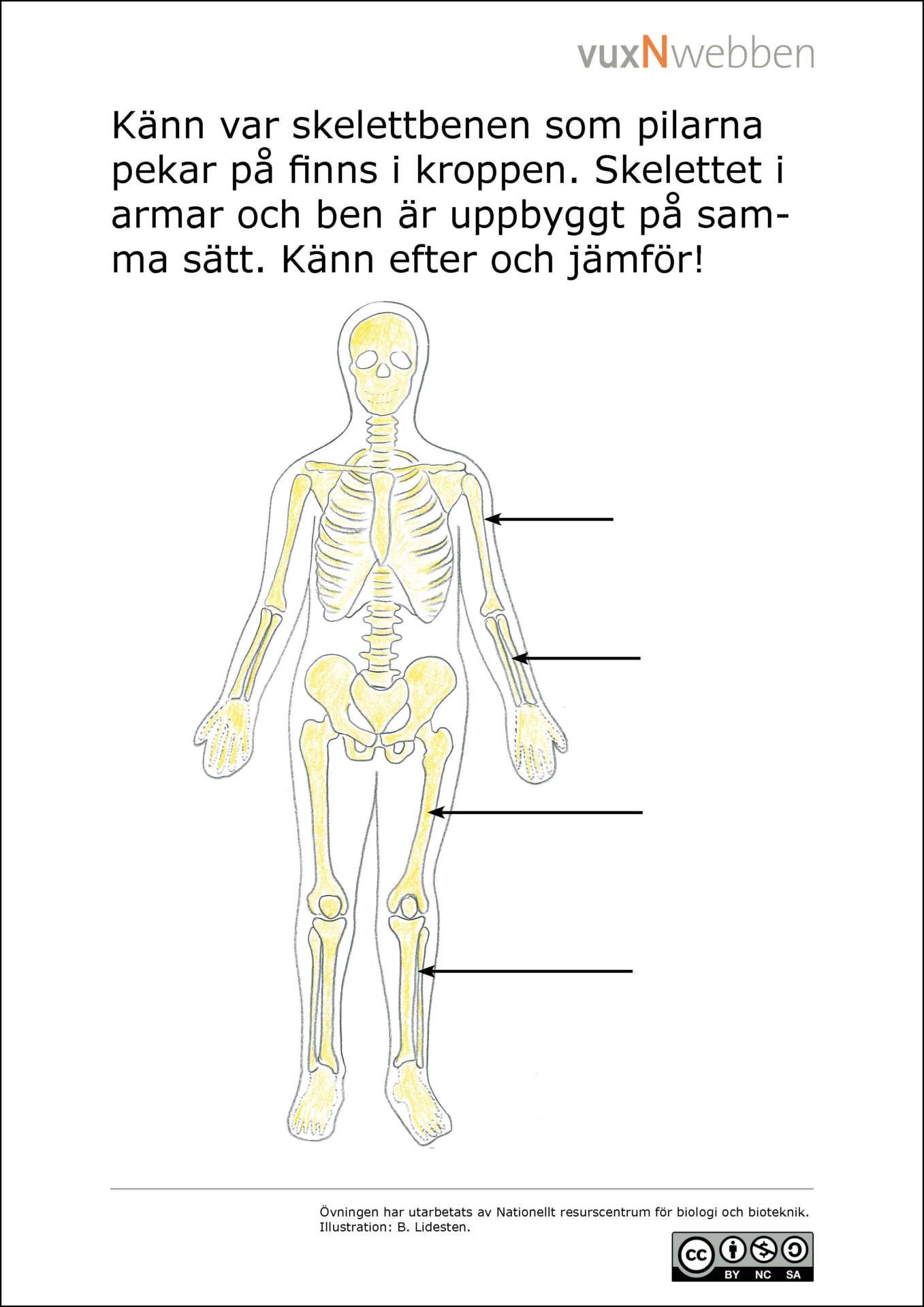 hur många ben har vi i kroppen