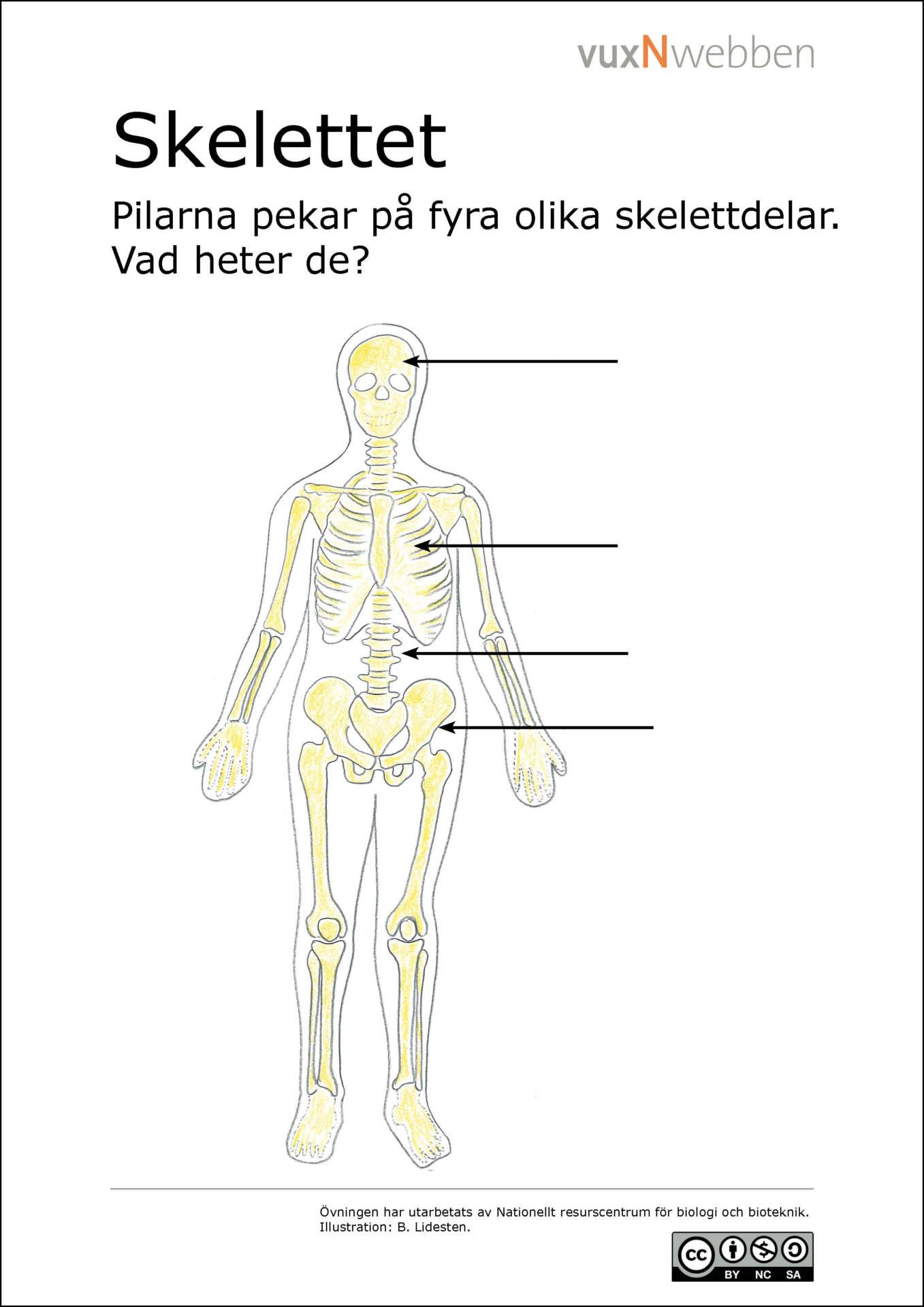 olika leder i kroppen