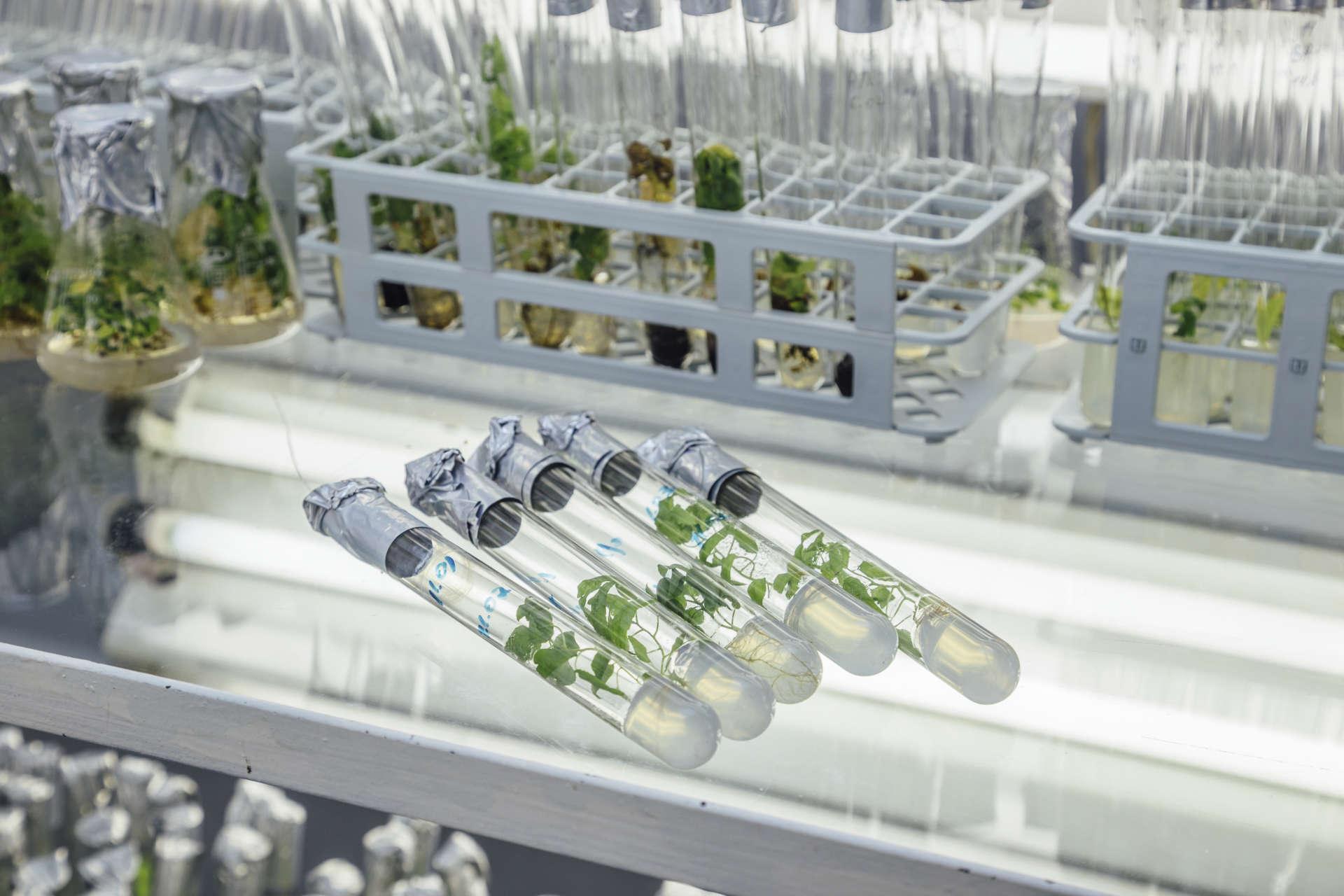 Fascinerande forskning. CRISPR. Gensaxar ändrar DNA. Bioresurs. Bioresursdagarna 2018. Praktiska försök och laborationer. Genteknik i skolan.