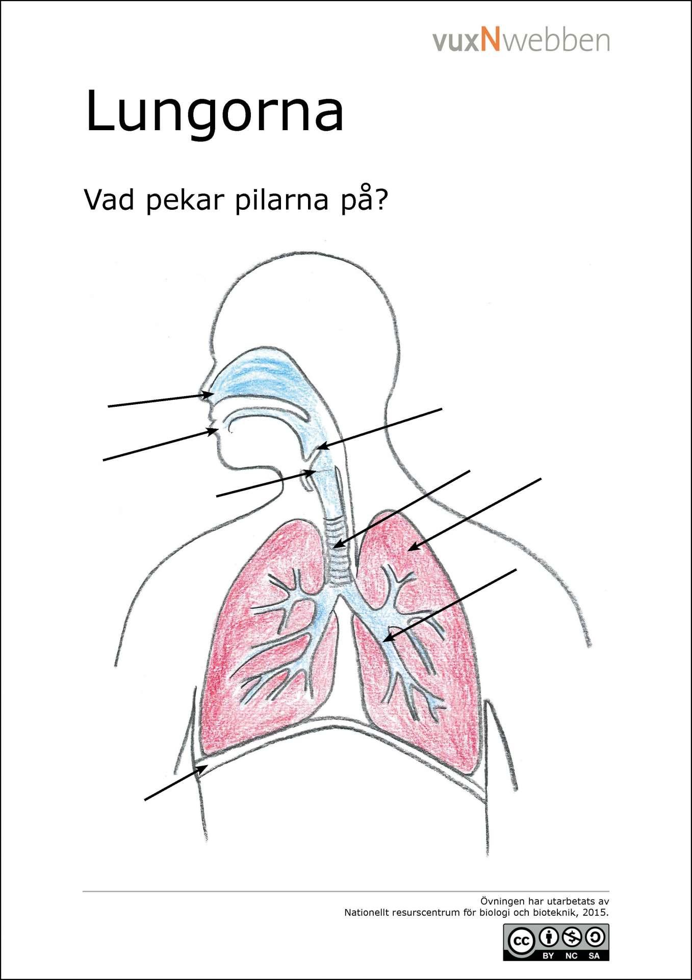 kliar i lungorna