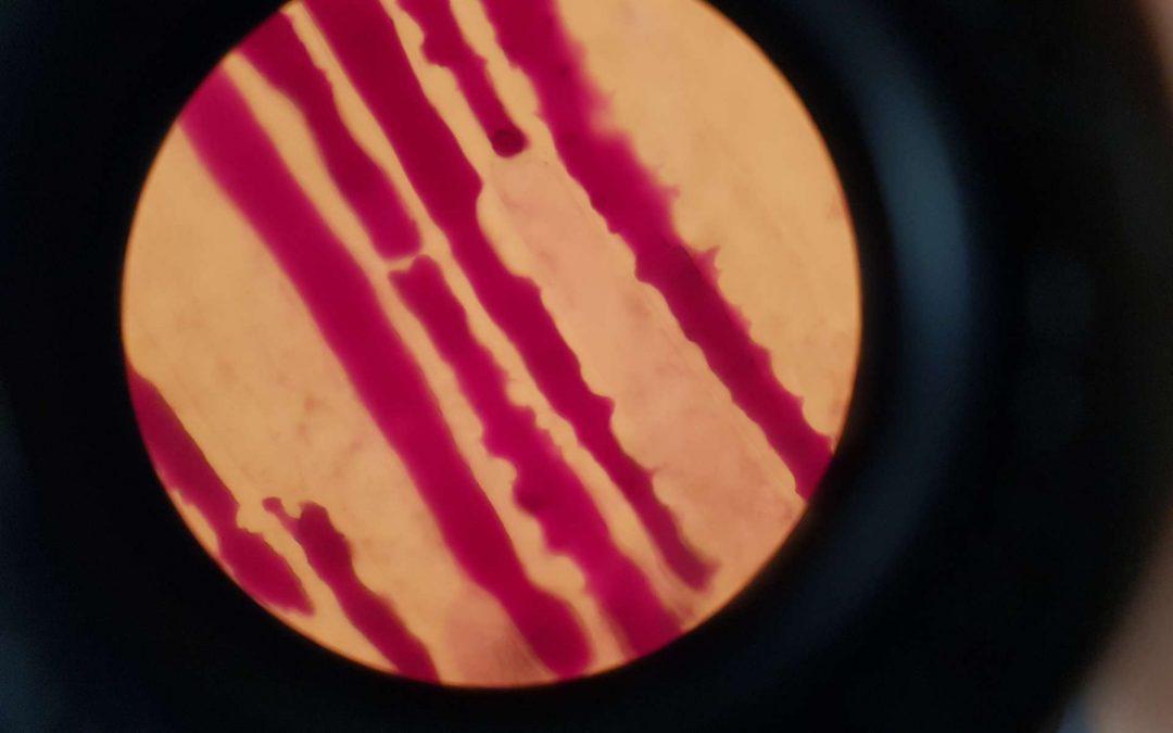 Zooma med Bioresurs 18/9 – Samtal om kontext kring laborationer