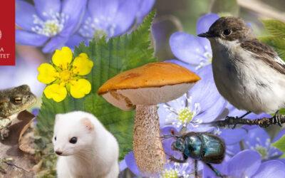 Bioresurs april-tips (och länk till ett galet aprilskämt ;-) )